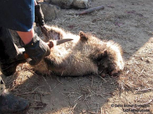 odieux commerce de la fourrure