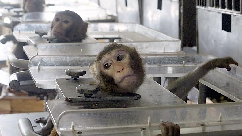 Mettre fin à l'expérimentation animale