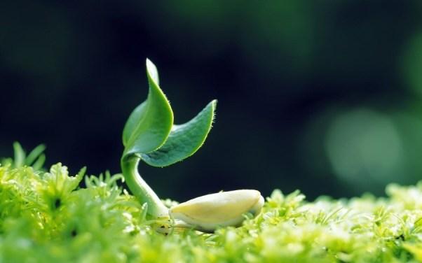 bonne alimentation naturopathie