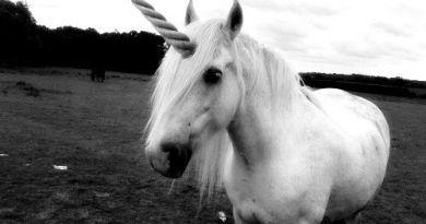 Fotos-de-Unicornio-2