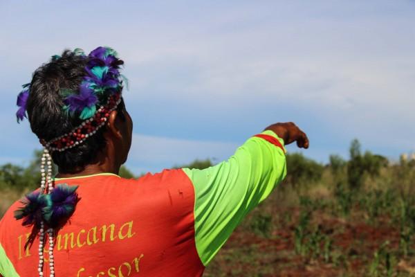 Pedro Alves mostra a sua roça na Tekoha Y 'Hovy. Foto: A.Pública/Greenpeace/I. Harari