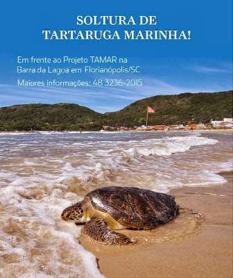 Soltura de tartaruga marinha na Barra da Lagoa