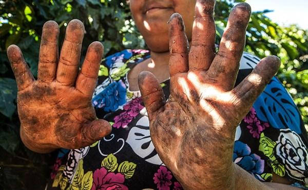 Trabalhadora em cafezal localizado em Santo Antônio do Amparo, Minas Gerais
