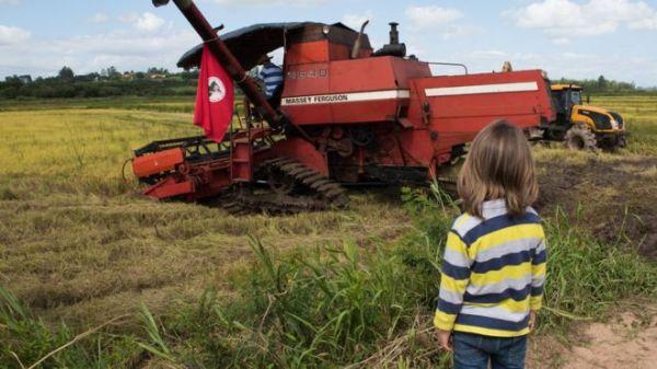 Menino observa colheita de arroz orgânico pelo MST no RS; produtores do movimento exportam produto para a Europa. Foto: Maurício Susin