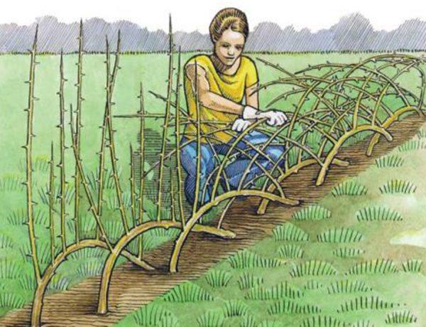 2 mil livros sobre bioconstrução, permacultura e agroecologia para baixar gratuitamente
