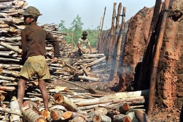Fiscais encontram 118 crianças em piores formas de trabalho infantil em Roraima