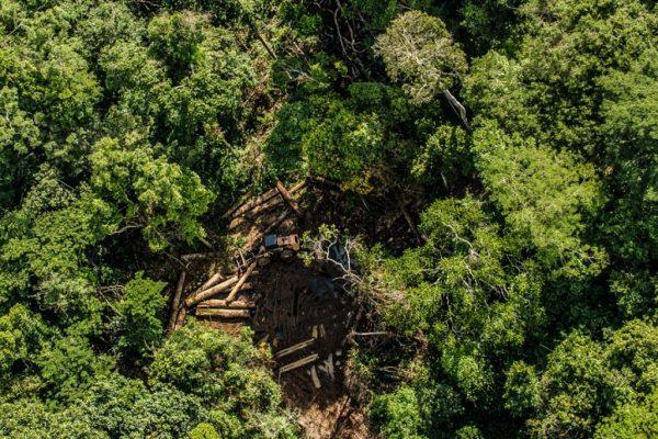 Operação barra roubo de madeira em terra indígena que era vendida no exterior
