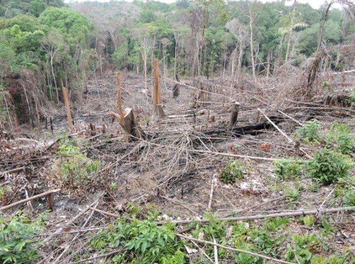 O colapso anunciado de um projeto de desenvolvimento sustentável