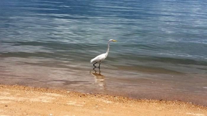 19/01/2018 – Fatma emite novo relatório sobre as condições das praias