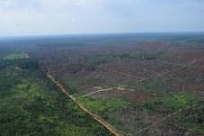 A extensão das áreas do desmatamento especulativo impressiona - Créditos: Foto: Juan Doblas