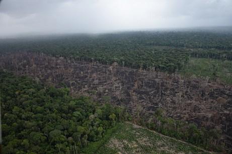 Médios e grande pecuaristas são responsáveis por parte considerável do desmatamento na Amazônia - Créditos: Foto: Juan Doblas