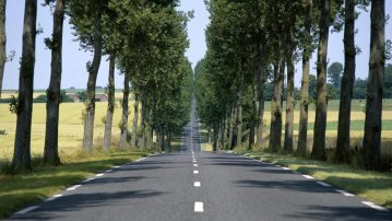 18750__straight-road-lined-by-trees_p