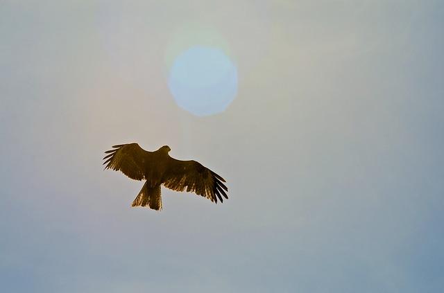Corazón de águila
