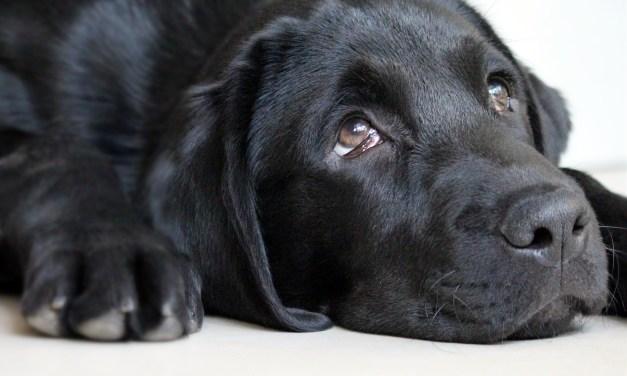 Rocco, el perro que presentía la muerte