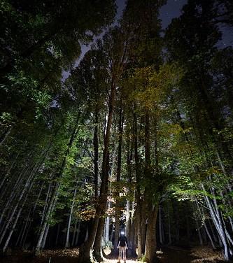 A través de la madera