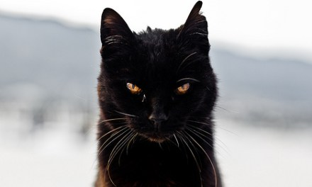 152 gatos negros