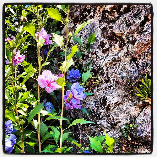 El Jardín mágico: Ortigas y flores