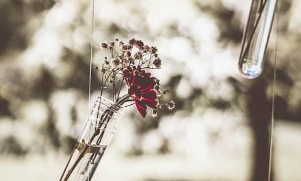 Una apuesta por el romanticismo