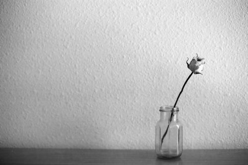 https://i2.wp.com/desanuviar.freehostia.com/wp-content/uploads/2010/11/dead-flower1.jpg