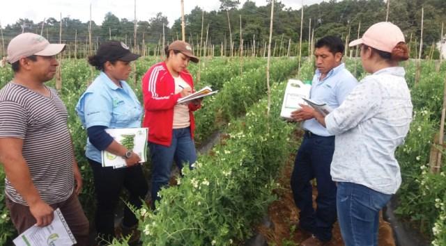 Agricultura ogánica en Sumpango