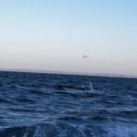 Puerto Madryn - 86