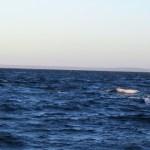 Puerto Madryn - 91