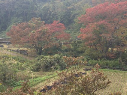 Fall colors and harvested rice fields at the beginning of the path.