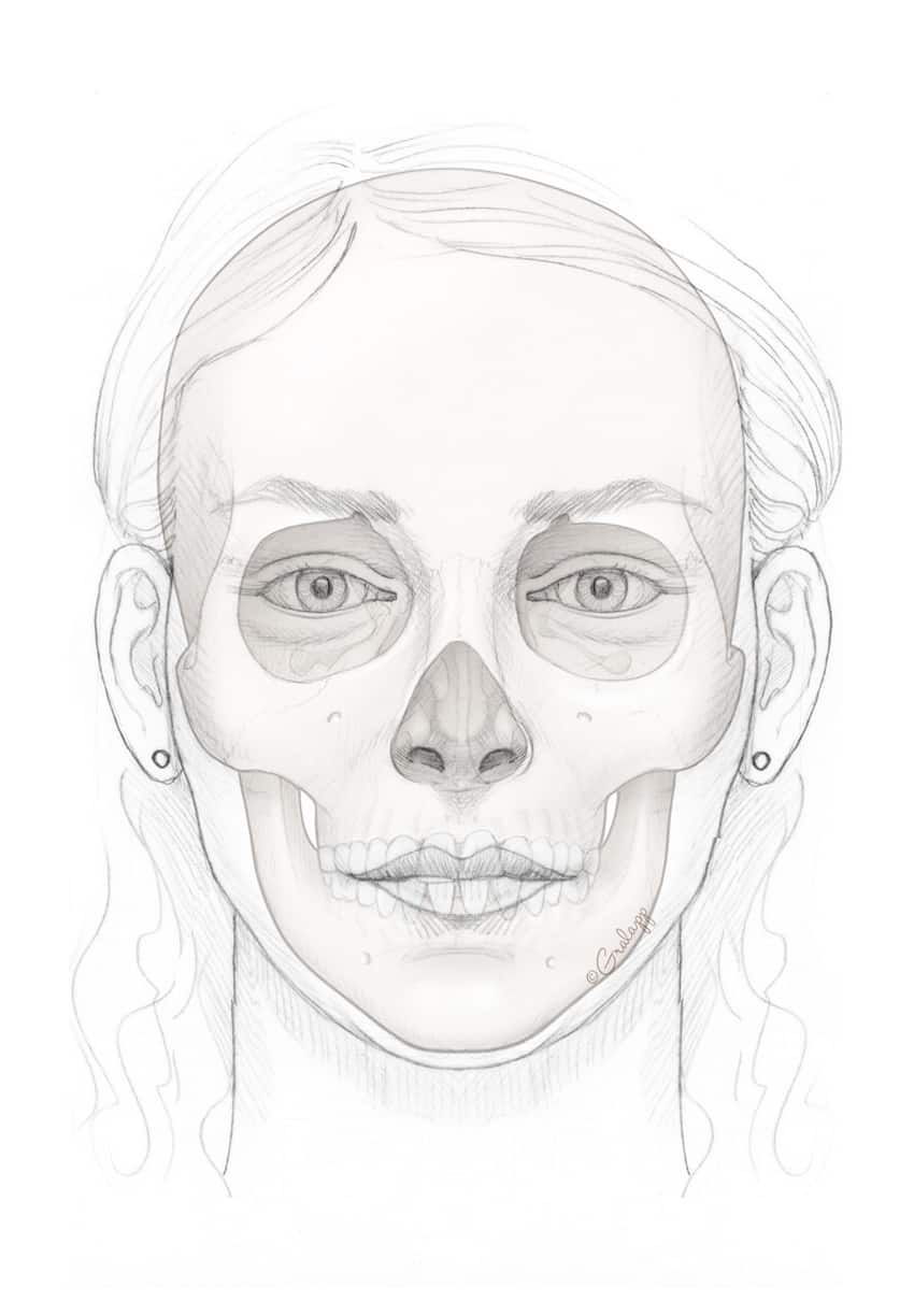 Female face skull. Image credit: Chris Gralapp
