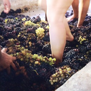 grapes 1799983 1280 - grapes-1799983_1280