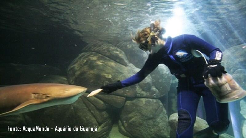 Tubaroes no AcquaMundo Aquario do Guaruja SP