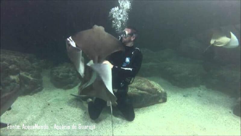 Mergulho com Tubaroes e Arraias no AcquaMundo - Aquário do Guarujá