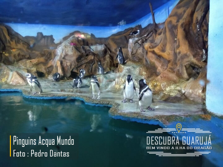 Pinguins no Acqua Mundo Aquário do Guarujá SP