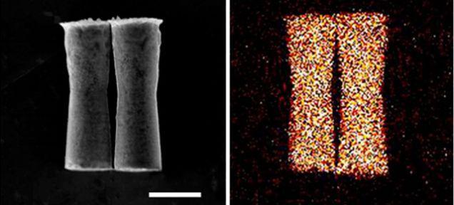 nanobos - Nanobots, robots dentro de un animal