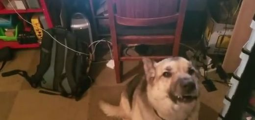 perro raspberry pi - Detecta los ladridos de tu perro y tranquilízalo mediante una Raspberry Pi