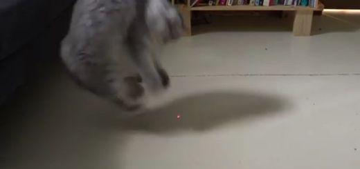 gato laser - Juega con tu gato con este laser controlado con Arduino