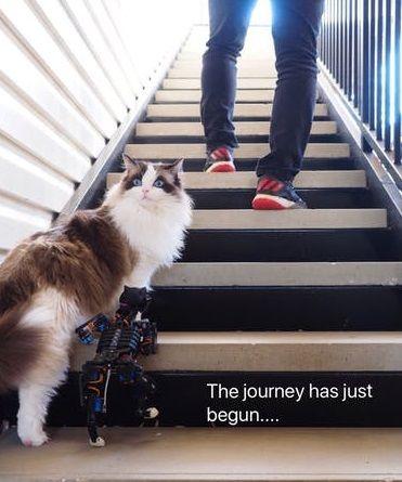 gato robot1 - Opencat, un gato robot para enseñar a los niños robótica