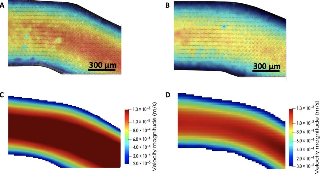 the researchers concluded that their combined vali - La impresión 3D en la lucha contra el cancer