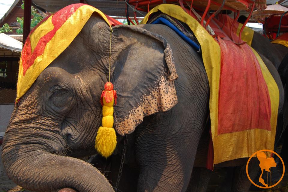 Elefante Ayutthaya - Descubre Tailandia