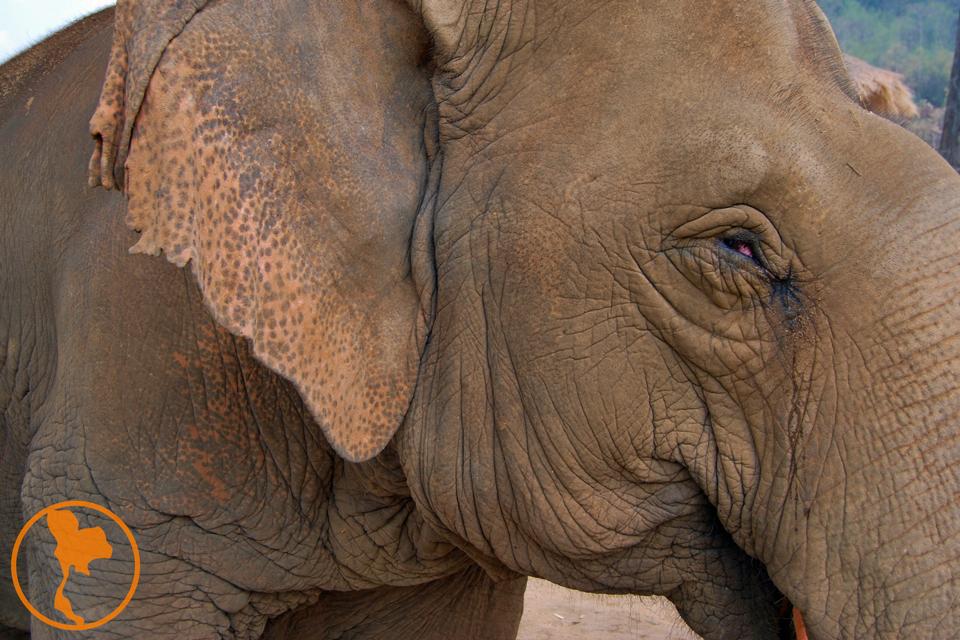 Elefante - Descubre Tailandia