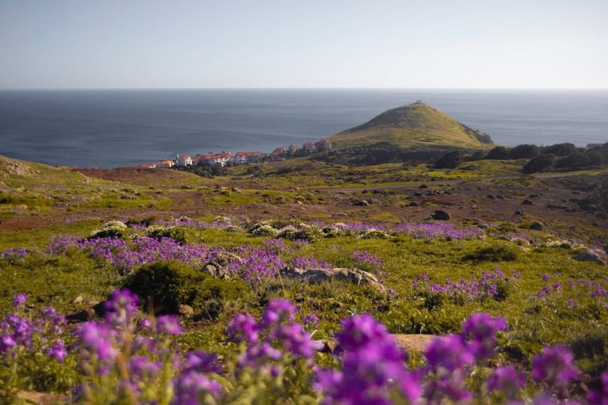 Prados en Ponta do Rosto en Madeira.