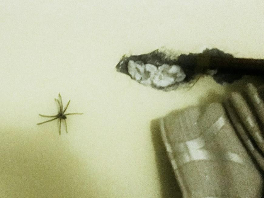 Araña del tamaño de una mano en Nepal