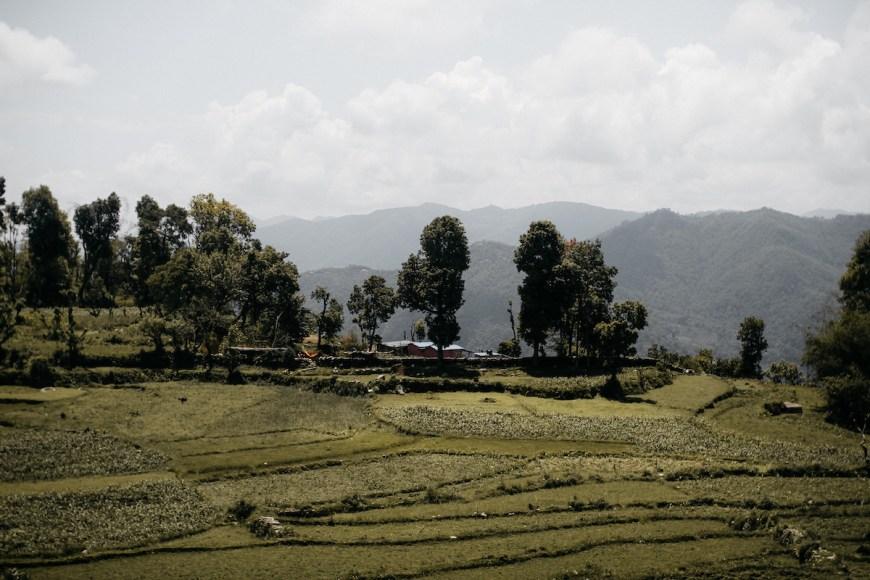 Campos de arroz en el Sarangkot, Nepal