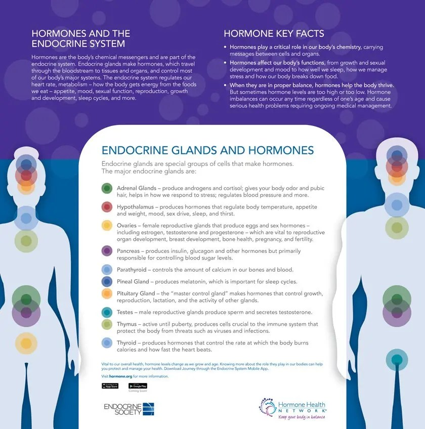 Endocrine Glands and Hormones Key Facts