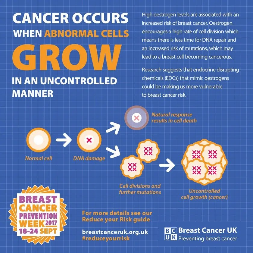 Endocrine Disrupting Chemicals and Increased Breast Cancer Risk