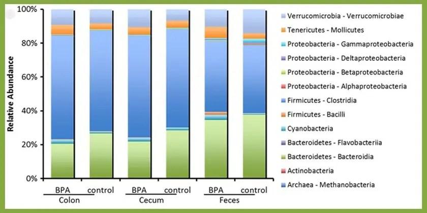 image of BPA exposure gut bacteria
