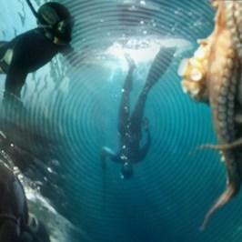 Pesca Submarina en Justiz desde dentro (Jaizkibel)