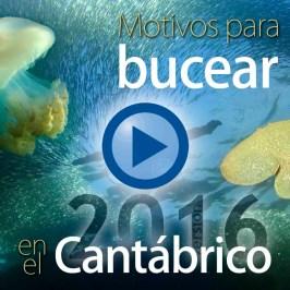 Motivos para bucear en el Cantábrico (versión 2016)