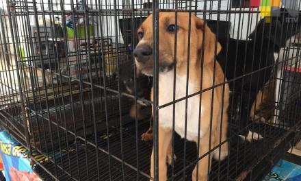 En Guatapé se reactiva el trabajo del comité de protección animal
