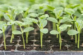 Recuperemos el sector agrícola