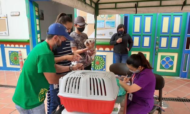Balance jornada de vacunación antirrábica de perros y gatos en Guatapé